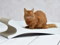 Feline XL