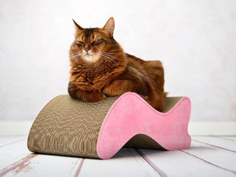 cat-on Geschenkgutschein 10,00 € |Geschenk-Gutscheine verschenken