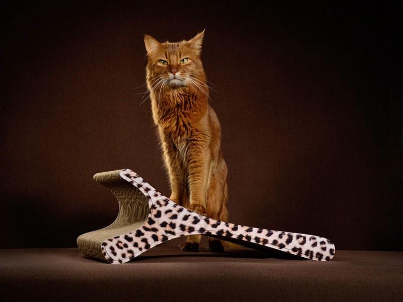 griffoir à chat cat-on Feline 052