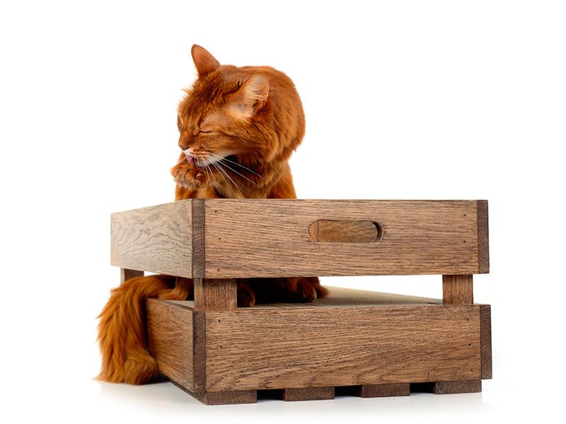 Cageot en bois de chêne - Huile: Noyer | caisse griffoir à chats en bois massif