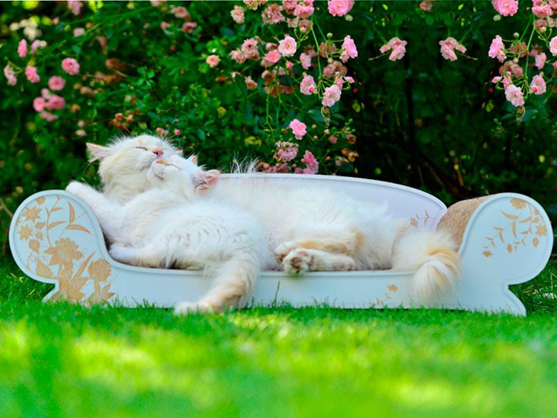 Canapé pour chat Vertige |griffoir en carton ondulé, méridienne, divan