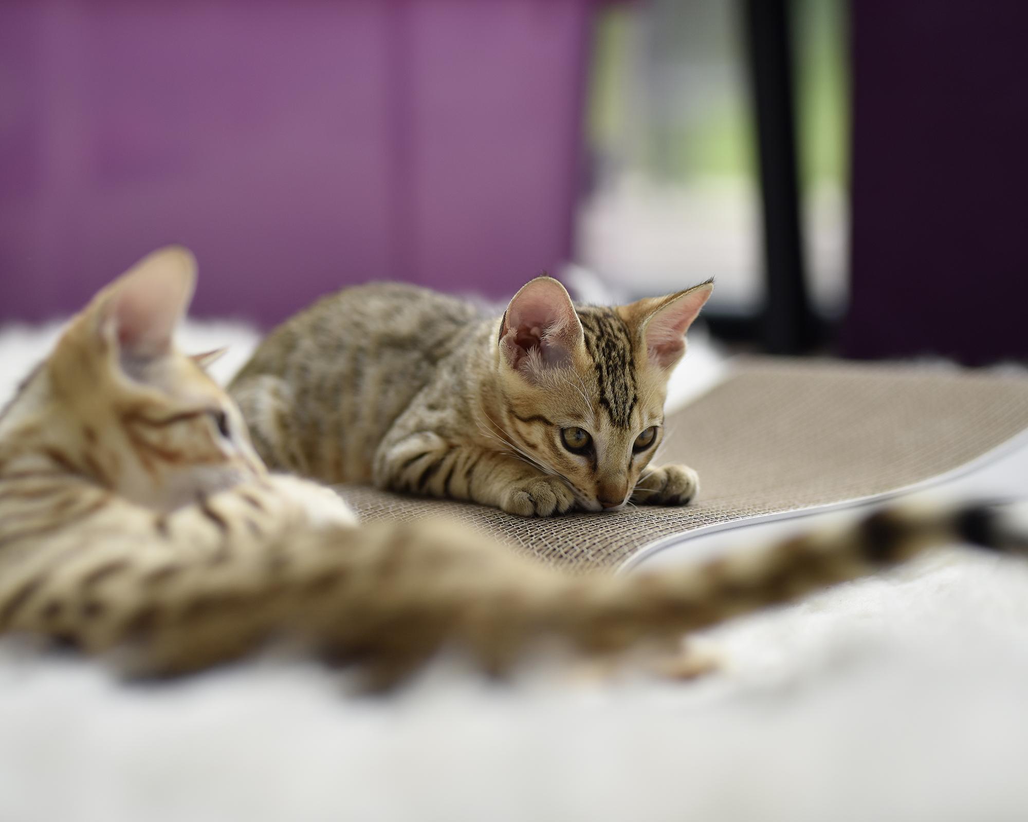 griffoir pour chats Grattoir Junior qualité allemande