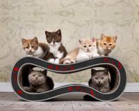 Aperçu: Griffoir design pour chats Singha M en rouge et noir 007