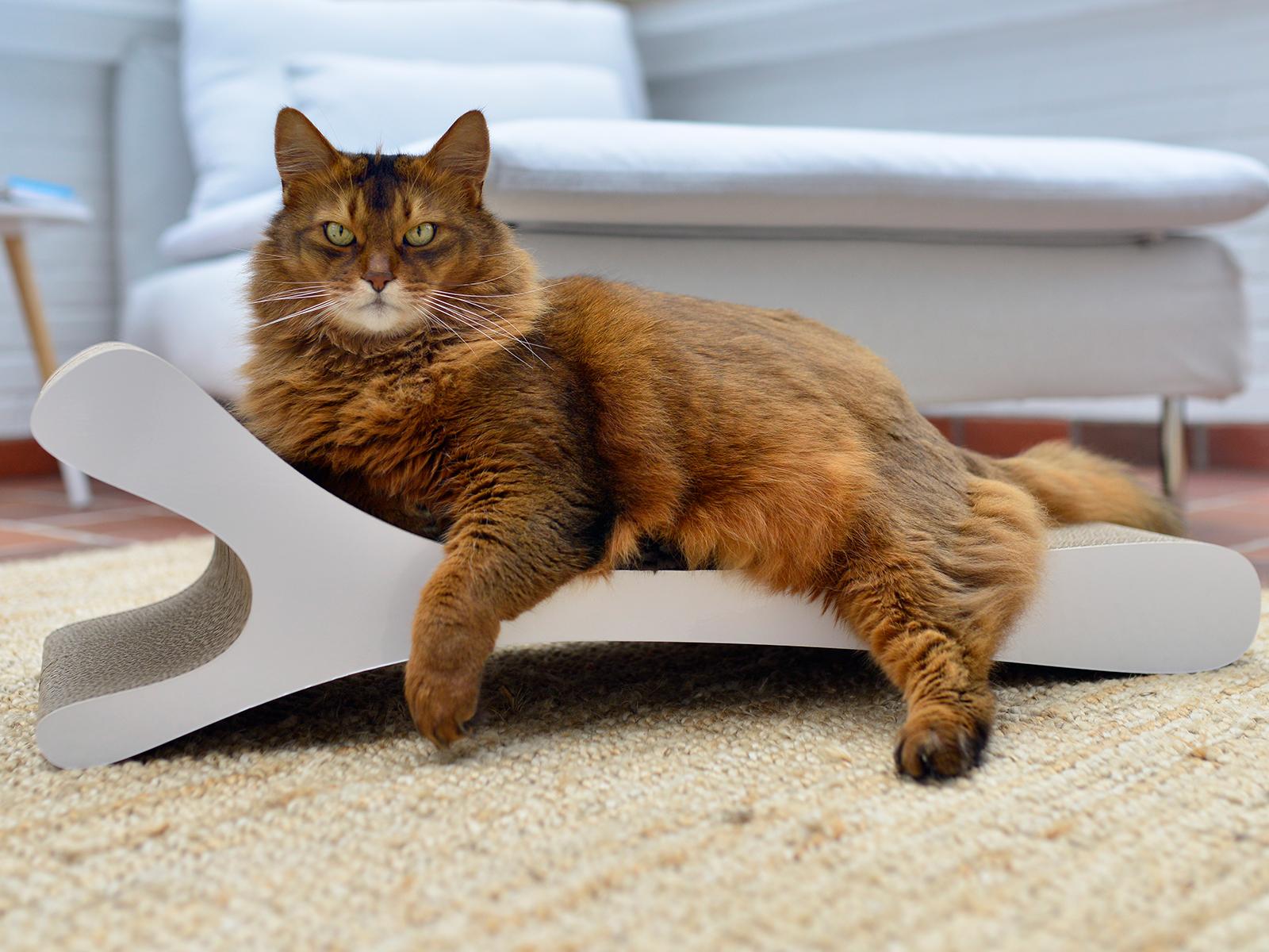 Das ergonomische Kratzmöbel für riesige Katzen und andere Artgenossen