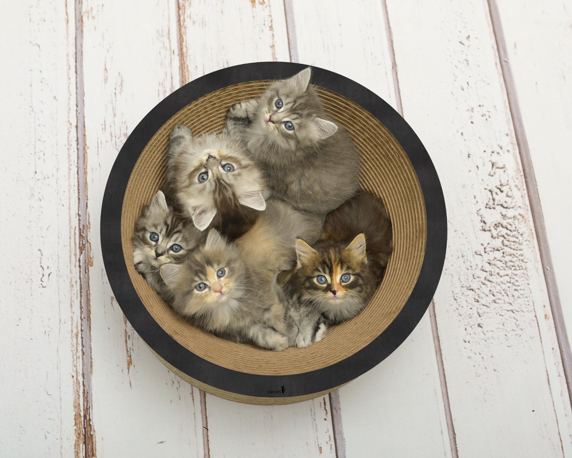 La Coupe corbeille à chat