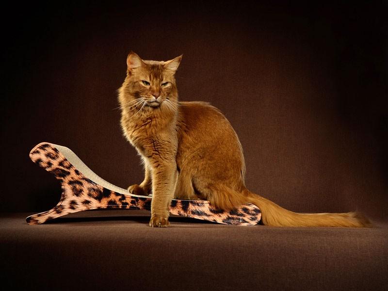 Leo-Optik - Kratzbretter für Katzen aus Wellpappe