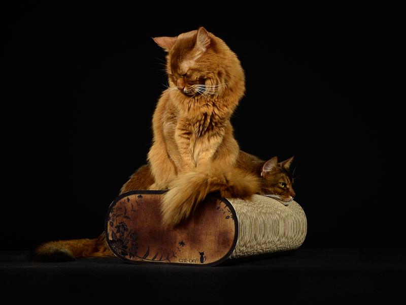 Grattoir à chat |arbre à chat en carton | griffoirs en carton ondulé