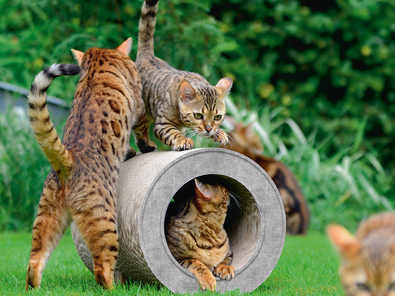 Kratztunnel cat-on Le Tube für Katzen