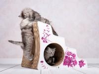 Lescalier - escalier en carton ondulé pour chats handicapés ou agés / ataxie