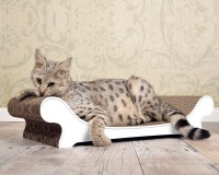 Le Canapé pour chats