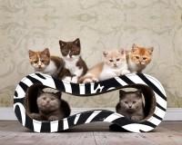 Aperçu: Griffoir en carton hautegamme Singha M - coloris zèbre noir et blanc