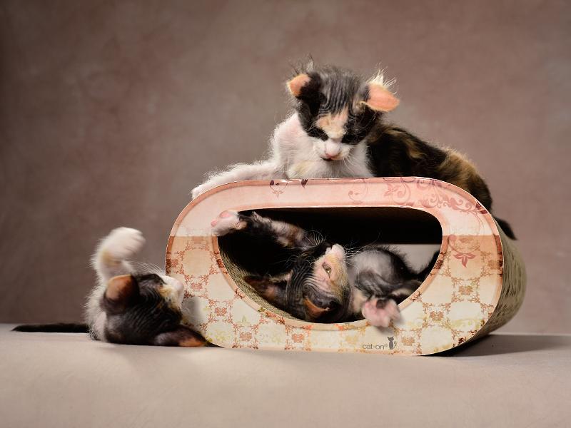griffoir en carton ondulé pour chats Le Tunnel | griffoir écologique, produit et conçu entièrement en Allemagne
