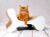 Aperçu: cat-on Molecular Fauteuil