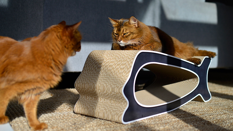 griffoir pour chat en carton ondulé qualité allemande
