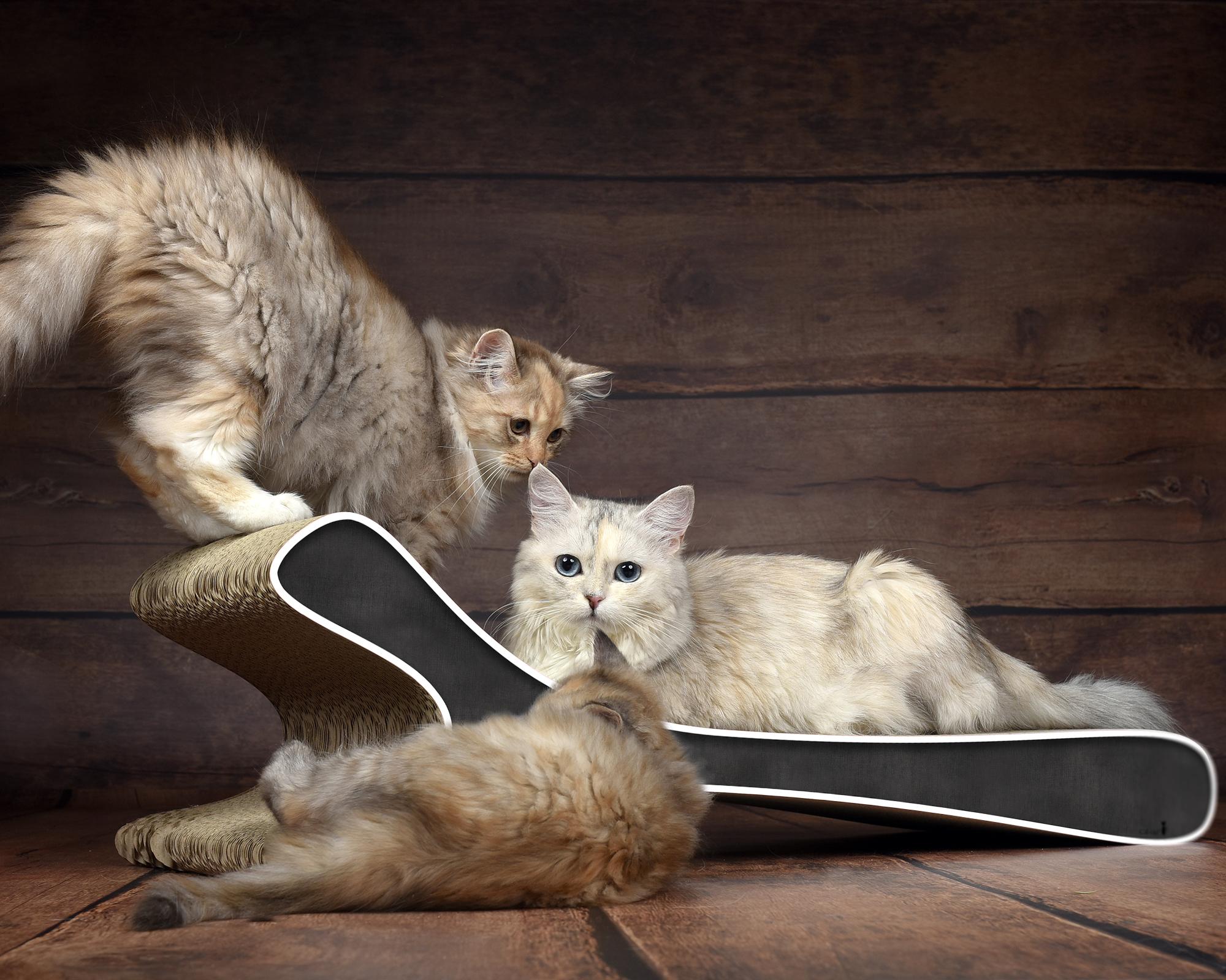 Griffoir Feline XL en carton ultra-résistant