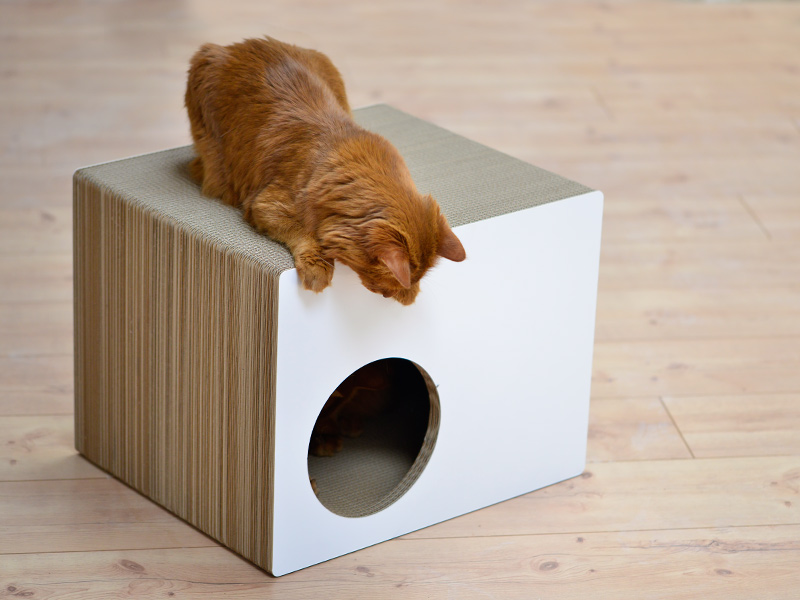Maison pour chats design en carton ultra-résistant