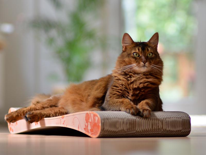 Griffoir en carton écologique pour chats