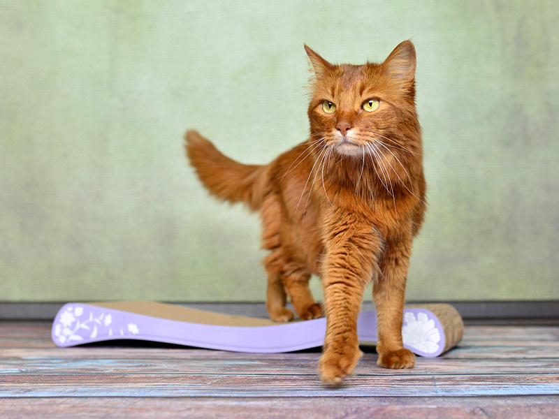griffoir en carton ondulé La Ola |griffoirs à chat cat-on