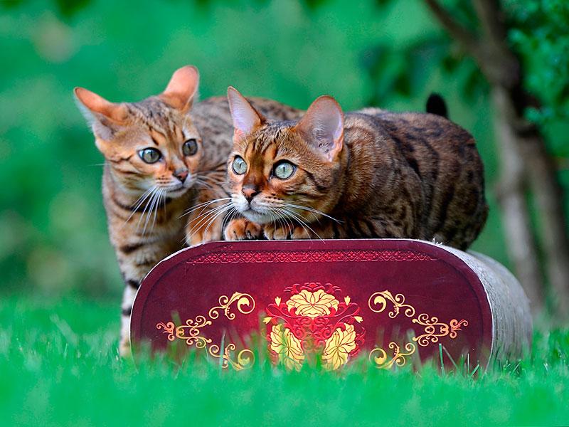 griffoirs haute gamme pour chats