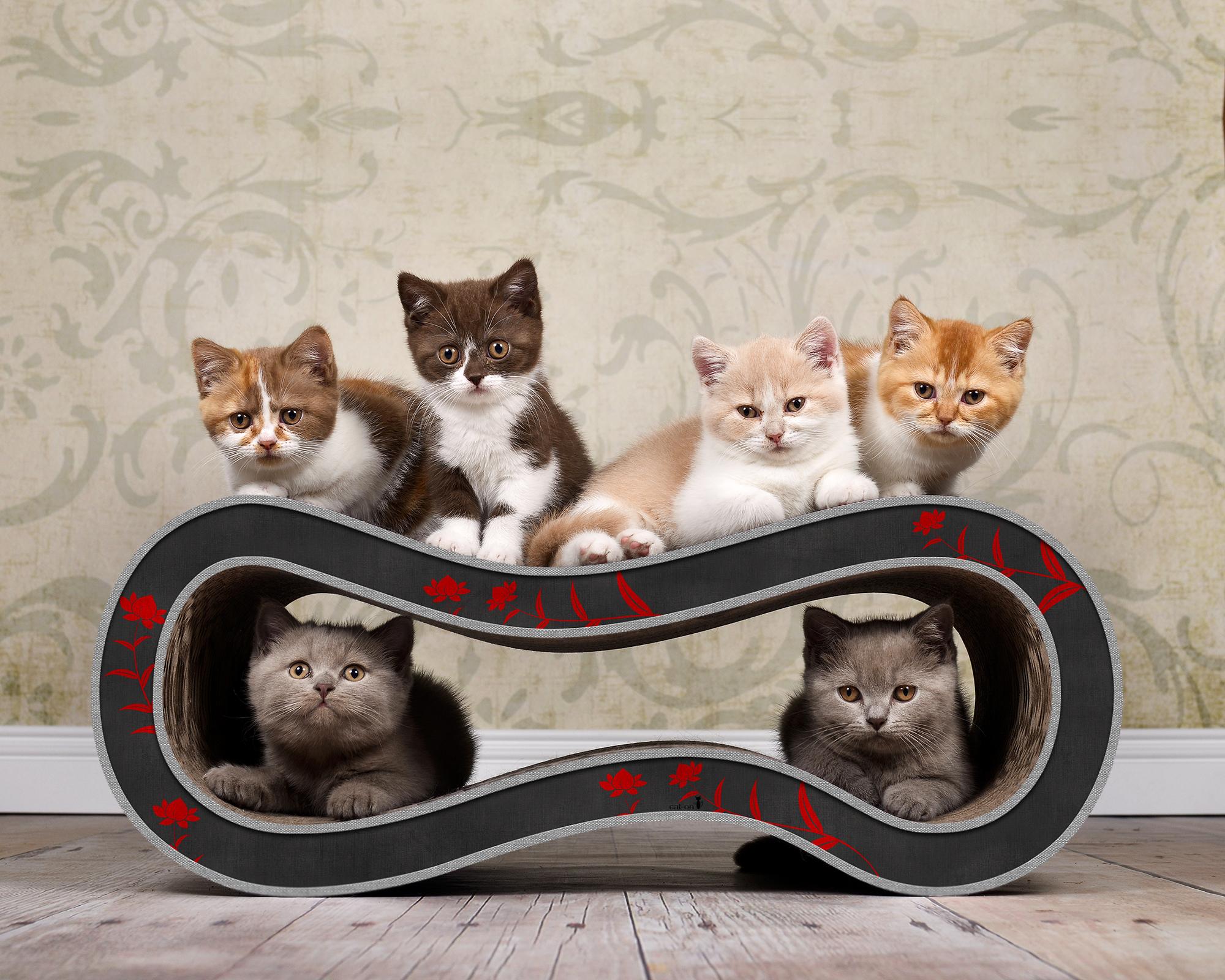 Griffoir design pour chats Singha M en rouge et noir 007