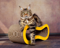 Aperçu: Griffoir pour chats design en couleur jaune-fleurs oranges
