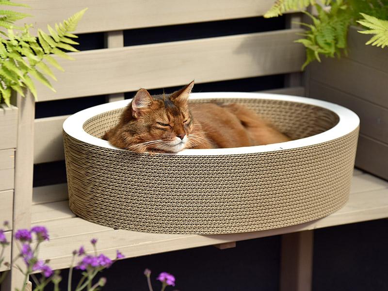 Kann man hier von einer Liebe zu cat-on sprechen? Ganz klar JA!