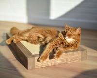 Boisé griffoir pour chats