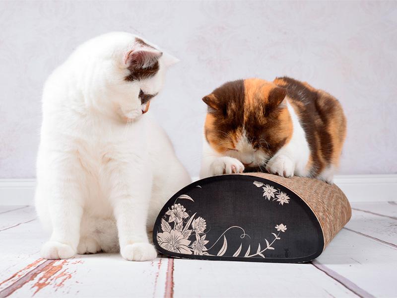 Griffoir Le Pain | grattoir pour chats écologique