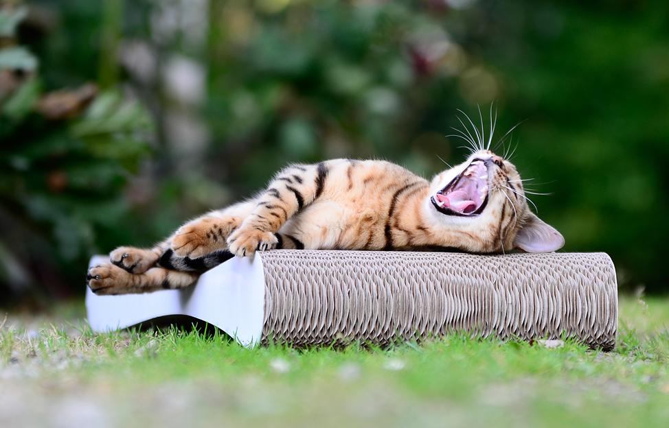Planche à griffer design pour chat Grattoir Slim Line - griffoir de qualité allemande