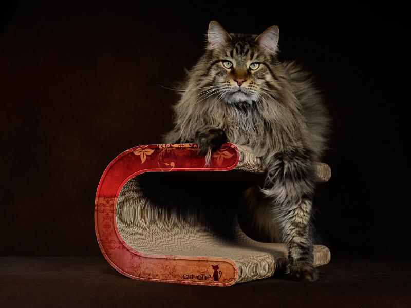 Kratzmöbel für grosse Katzen