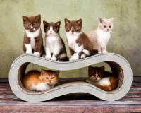 Aperçu: Griffoir design pour chats Singha M - couleur: gris