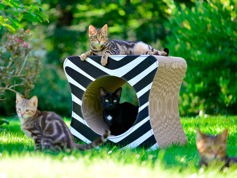 Katzenwürfel & Spieltunnel