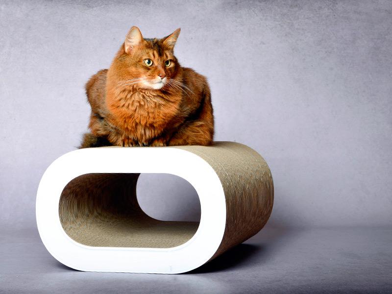 cat-on Le Tronc XL | XL Möbel für große Katzen