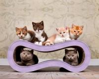 Aperçu: griffoir design en carton Singha M, couleur lilas