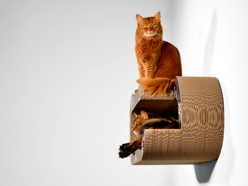 Kletterwand für Katzen | cat-on La Maitresse