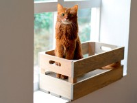 Aperçu: cat-on Kratzbox aus Holz | Katzenstiege S in Steingrau
