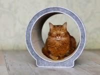 Aperçu: Arbre à chat design |griffoir en carton cat-on Le Rond