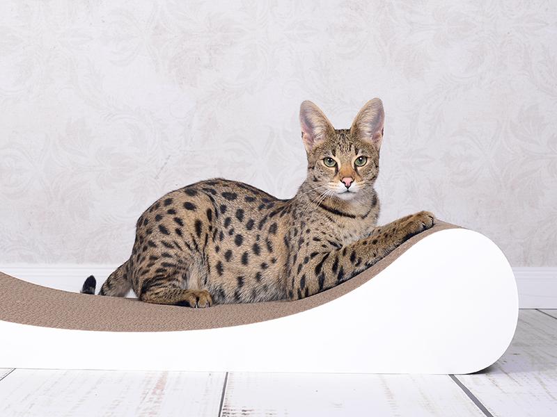 Divan design pour chats en blanc