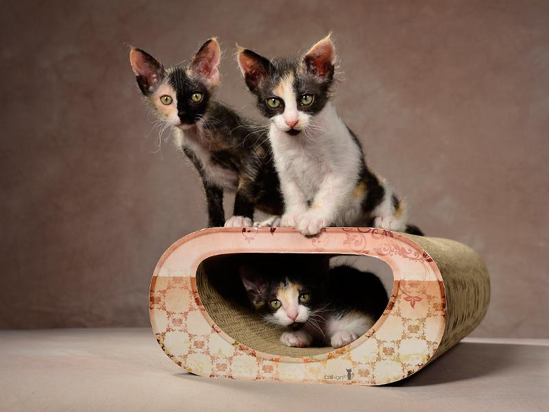 Griffoir à chat Le Tunnel |griffoir en carton ondulé exceptionel, fabriqué en Allemagne, sans odeurs