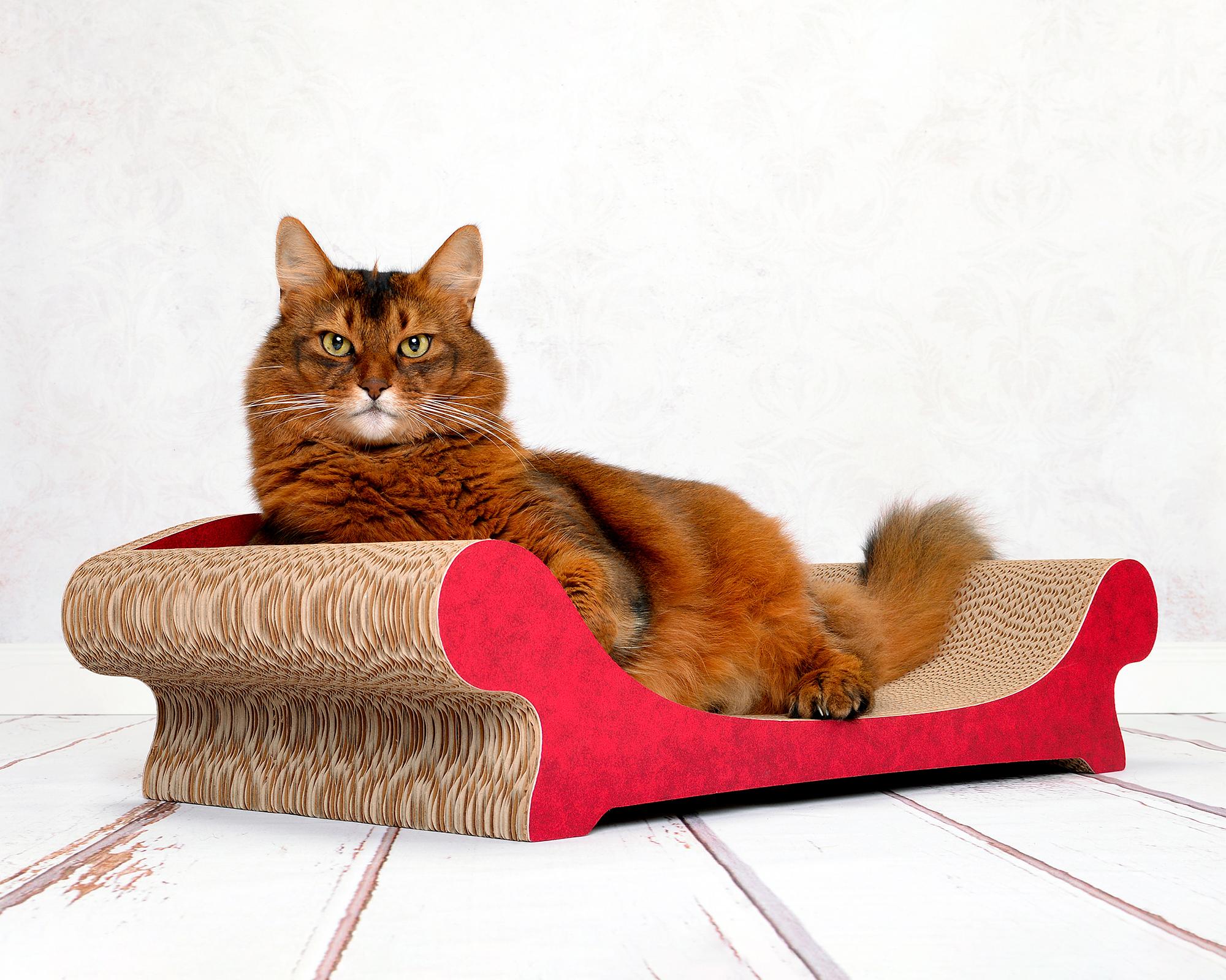 griffoir Le Canapé Plus pour chats - l'édition en papier