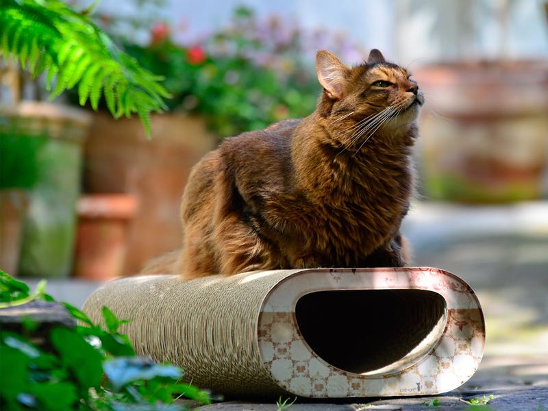 Grattoir en carton ondulé Le Tunnel   griffoir à chat écologique